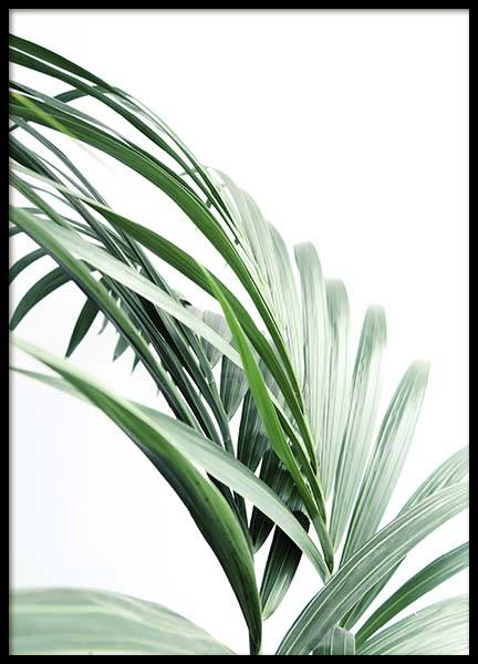 Palm Tree Leaves Close Up Plakat w grupie Plakaty / Fotografia w Desenio AB (10244)