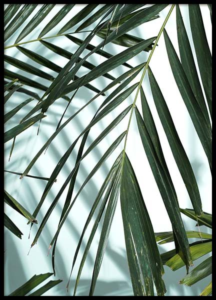 Palm Leaves Shadow No1 Plakat w grupie Plakaty / Fotografia w Desenio AB (10284)