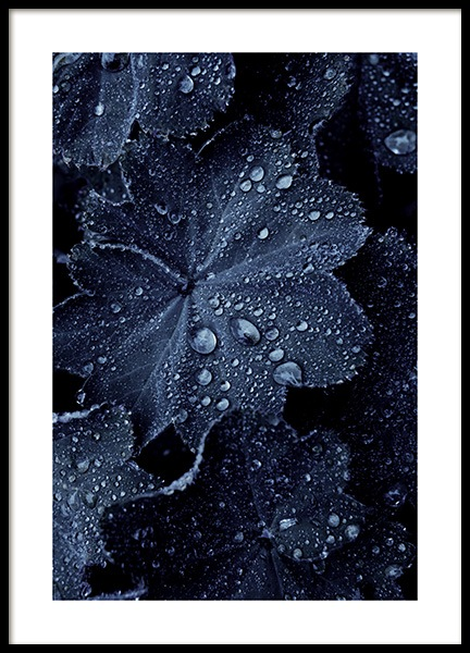 Raindrops on Blue Leaves Plakat w grupie Plakaty / Fotografia w Desenio AB (11052)