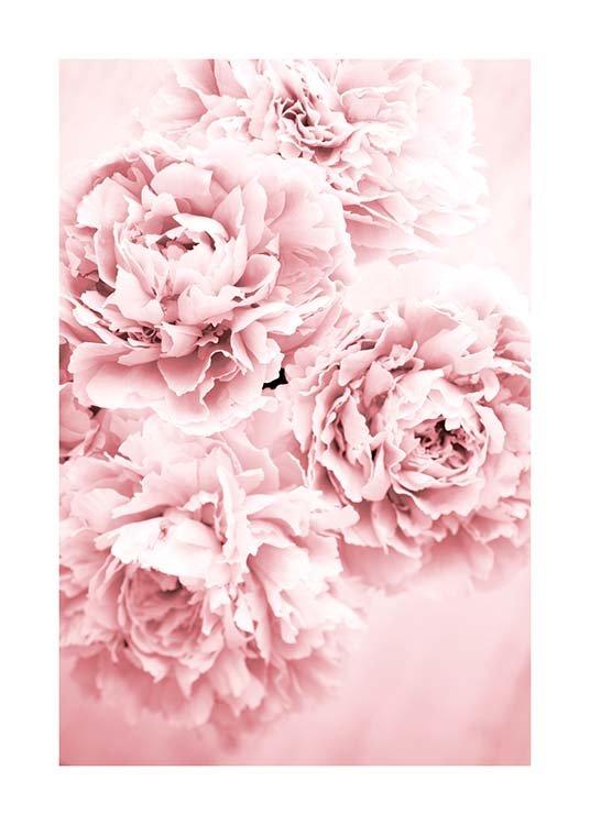 Pink Dream Plakat / Fotografia w Desenio AB (10054)