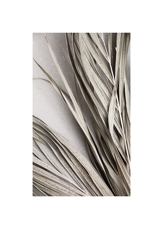 Dry Palm Leaves No2 Plakat / Palmy w Desenio AB (13671)