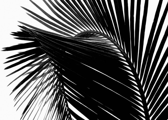 Black Palm Leaf One Plakat / Fotografia w Desenio AB (3277)