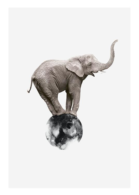 Elephant On Circle, Plakat / Fotografia w Desenio AB (8312)