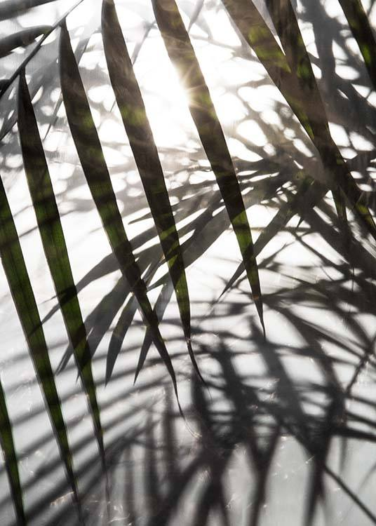 Palm Leaves Sunlight Plakat / Fotografia w Desenio AB (8851)